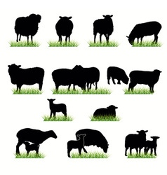 16 sheeps silhouettes set vector