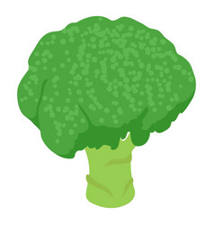 Broccoli icon isometric 3d style vector