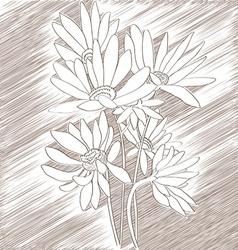 daisies sketch vector image vector image
