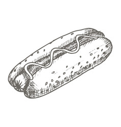 Vintage hot dog drawing hand drawn vector