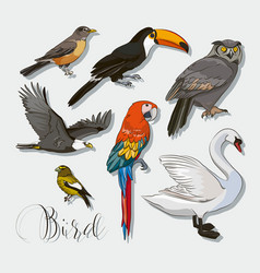 Bird collection set vector