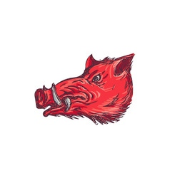 Wild boar razorback head side drawing vector