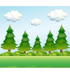 Green pine trees vector image vector image