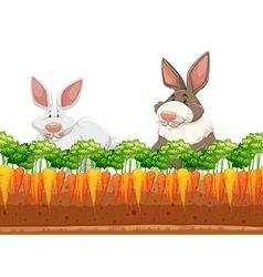 Two rabbits in carrot garden vector image vector image