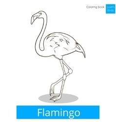 Flamingo learn birds coloring book vector image vector image