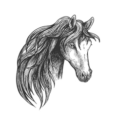 Horse of american quarter breed sketch portrait vector image