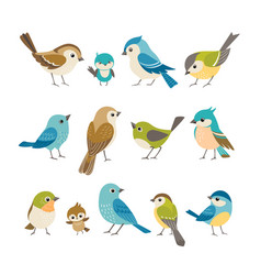 little birds vector image