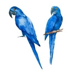 Nice watercolor blue parrots vector image vector image