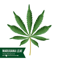 cannabis icon medical green plant vector image