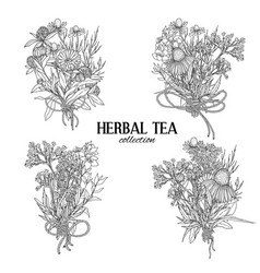 four bouquets composed of medicinal herbs and vector image