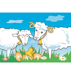 Sheep ram chicken vector