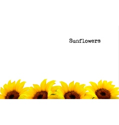 Nature background with yellow sunflowers vector