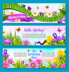 spring flower greeting banner set design vector image