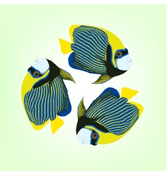 Three swimming fishes vector
