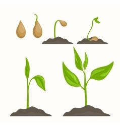 Plant evolution life cycle growth phases vector