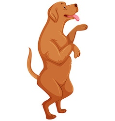Brow dog standing on two legs vector