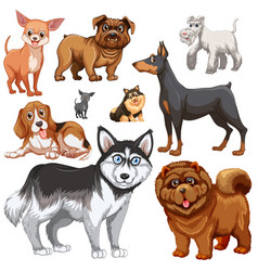 different types of dogs vector image