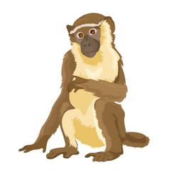 Sitting monkey isolated vector