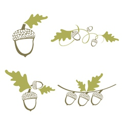 Acorn Design Collection vector image