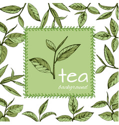 green tea logo12eps vector image