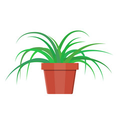Grass plant in flower pot decoration home plant vector