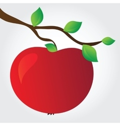 apple on a branch vector image