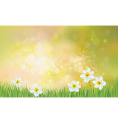 flowers spring vector image