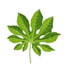 Full leaf of fatsia japonica palm tree vector