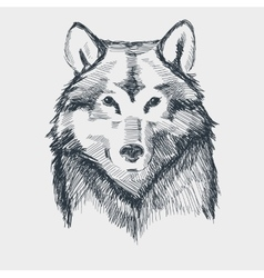 Wolf head grunge hand drawn sketch vector