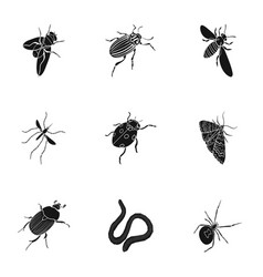 beetle wasp bee ant fly spider mosquito and vector image