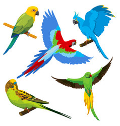 cartoon parrots tropical birds set vector image