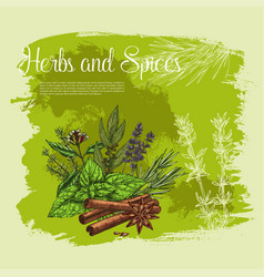 Poster of thyme spice basil rosemary herb vector