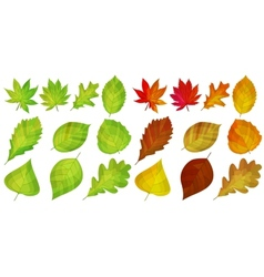 Set with different autumn leaves vector
