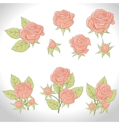 Big set of a beautiful colored roses vector image vector image