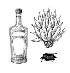 Tequila bottle with blue agave mexican alcohol vector