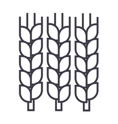 wheat line icon sign on vector image vector image