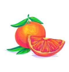 Grapefruit hand drawn on a white background vector image vector image