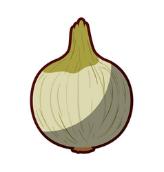 light colors of onion in closeup with thick vector image