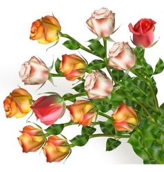 Bouquet of rose flowers on white EPS 10 vector image