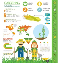 Gardening work farming infographic corn graphic vector