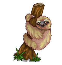 Cute sloth clinging to the trunk of tree vector