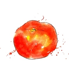 Watercolor red tomato vector