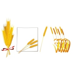Bunch of wheat vector image