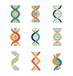 DNA genetics icons vector image vector image