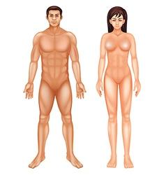 Human Body vector image vector image