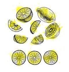 watercolor hand drawn set of lemon sketch vector image vector image
