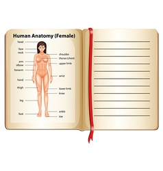 Human anatomy of female vector