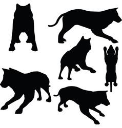 animal wolf silhouette vector image