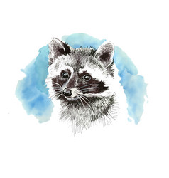 raccoon cartoon style portraitcute art print for vector image
