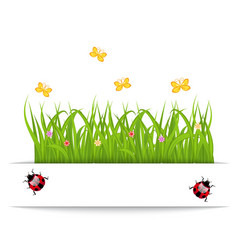 Spring card with grass flower butterfly ladybug vector image